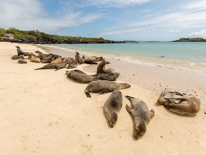 Ñan Magazine - Explora Galápagos